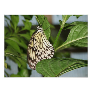 Butterfly - Hanging Around Poster