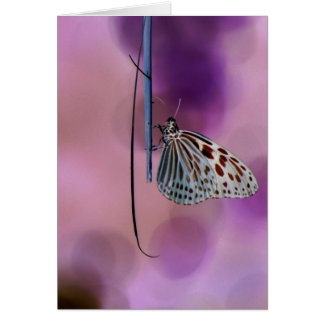 Butterfly Hanging From A Twig Card