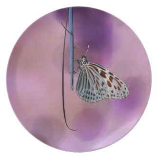 Butterfly Hanging From A Twig Melamine Plate