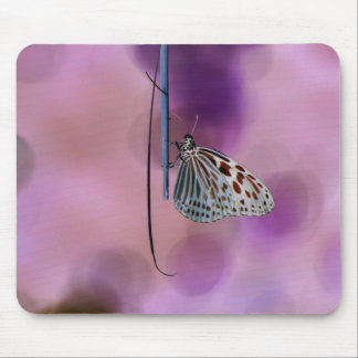 Butterfly Hanging From A Twig Mouse Pad