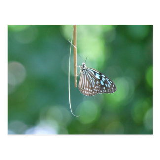 Butterfly Hanging From A Twig Postcard