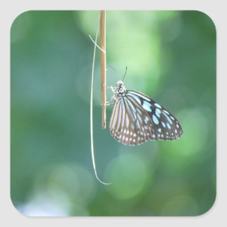 Butterfly Hanging From A Twig Square Sticker