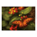 Butterfly - Heliconius Cards