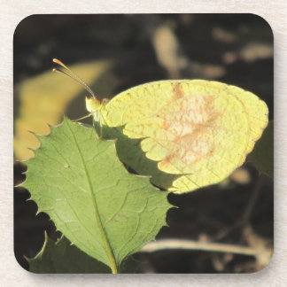 Butterfly Hiding Behind a Leaf Coasters