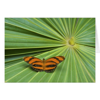 Butterfly House Card
