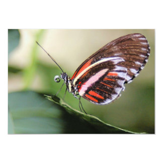 Butterfly Identification Invitation