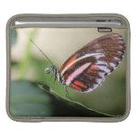 Butterfly Identification iPad Sleeve