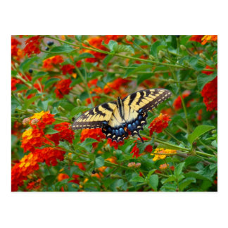 Butterfly in a field of flowers postcard