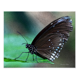 Butterfly in Aqua Poster