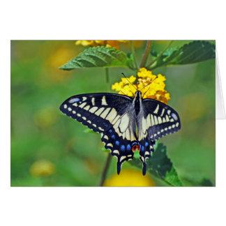 Butterfly in Encinitas Card