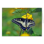 Butterfly in Encinitas Greeting Cards