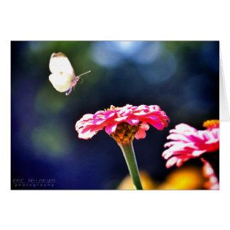 Butterfly in Flight Card
