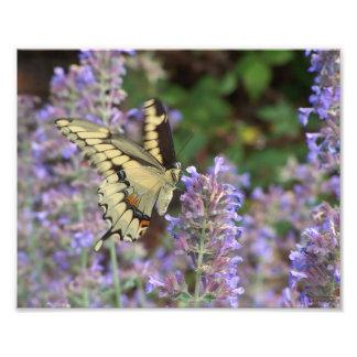 Butterfly in Flight Photo