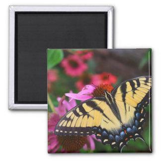 Butterfly in Flower Garden Magnet