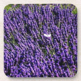 Butterfly in Lavender Field Coasters