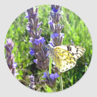 Butterfly in Lavender Round Stickers