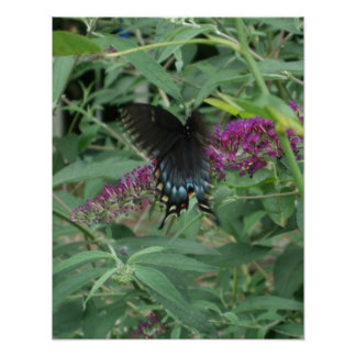 Butterfly in Motion Poster/Print Bordered Poster