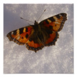Butterfly in Snow Posters