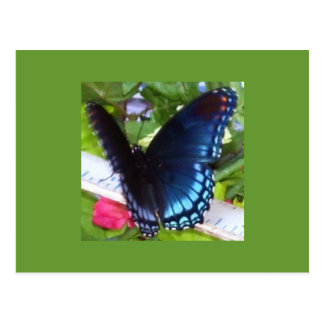 Butterfly in Spring, Texas Postcard