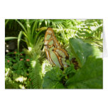 Butterfly in Tropical Leaves Nature Photography Card
