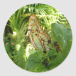 Butterfly in Tropical Leaves Nature Photography Classic Round Sticker