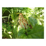 Butterfly in Tropical Leaves Nature Photography Photo Print