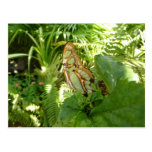 Butterfly in Tropical Leaves Postcard