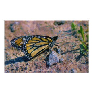 Butterfly Insect Impressionist Art by Stepen Chen Poster