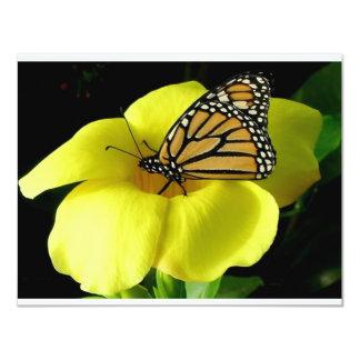 Butterfly Announcement