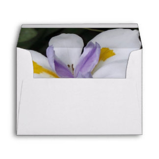 Butterfly Iris Envelope