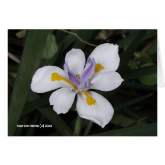Butterfly Iris Stationery Note Card