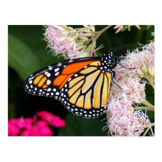 Butterfly Kiss Postcard
