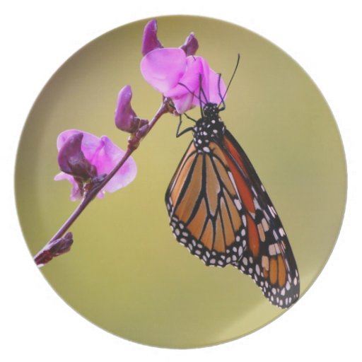 Butterfly Kisses Collecor Plate
