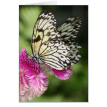 Butterfly Kisses I Greeting Card