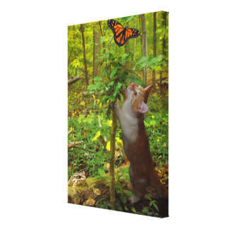 Butterfly kitten frog Stretched Canvas Print