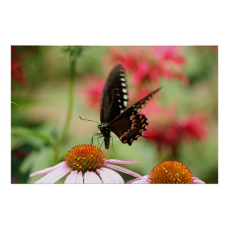 Butterfly Landing 36 x 24 Poster
