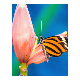 Butterfly Landing on Purple Flower Letterhead