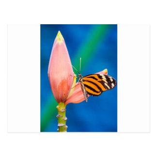Butterfly Landing on Purple Flower Postcard