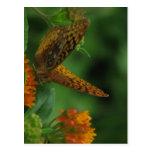 Butterfly Landing Postcards