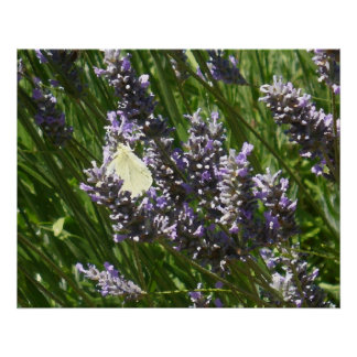 Butterfly & Lavender Oil Painting Poster