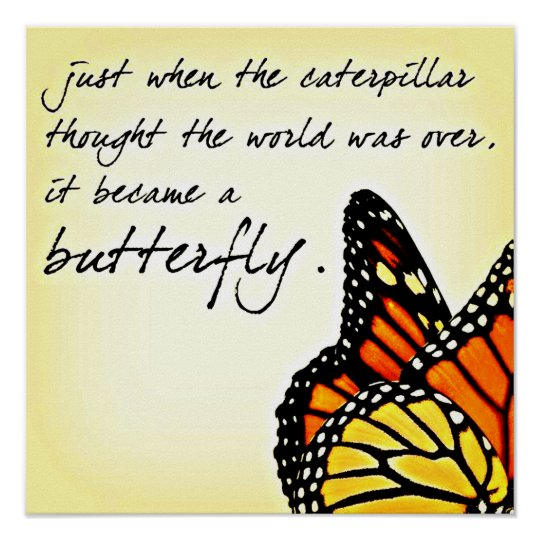 Butterfly Life Struggle Inspirational Quotes Poster Zazzlecom