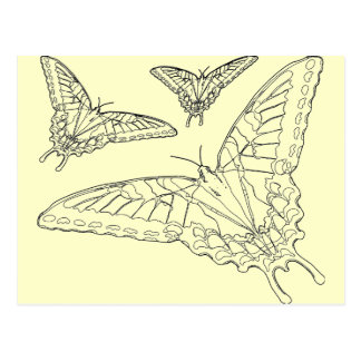Butterfly Line Drawing Postcard