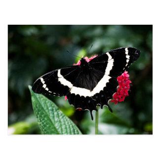 Butterfly Lolipop Postcard
