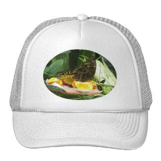 Butterfly Lunch 2 Trucker Hat