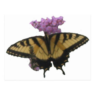 Butterfly Lunch Postcards