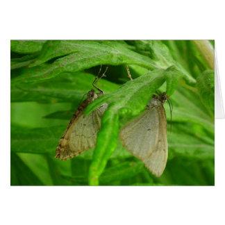 Butterfly Male & Female Card