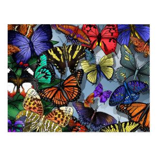 Butterfly Medley Postcard
