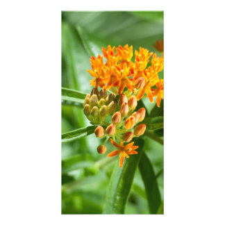Butterfly Milkweed Flower and Foliage Card