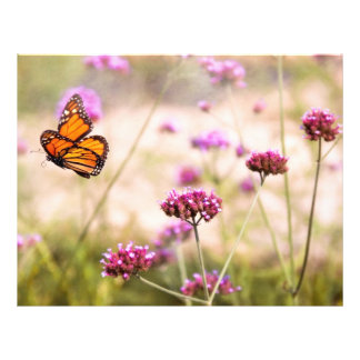 Butterfly - Monarach - The sweet life Flyer