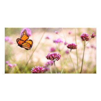Butterfly - Monarach - The sweet life Photo Greeting Card